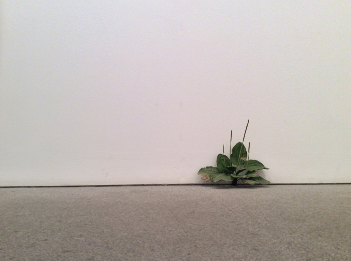 Tony Matelli, Weed, 2015 @ Marlborough